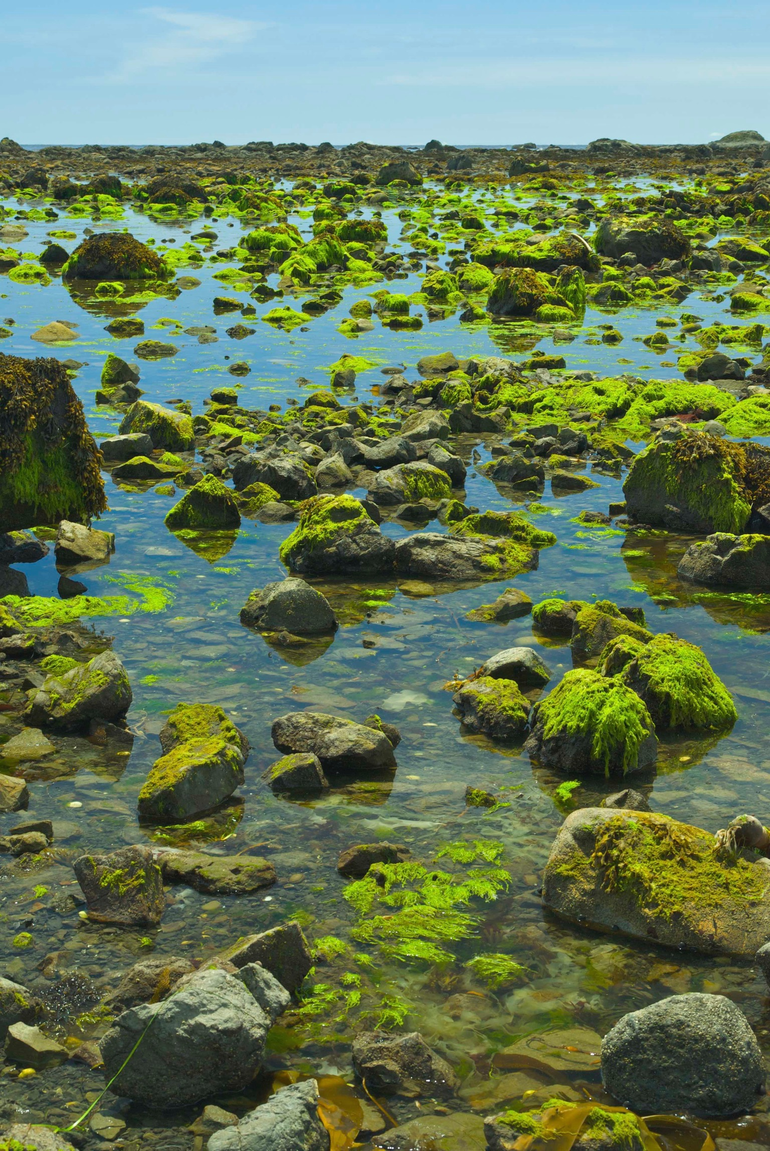 Moss on shore