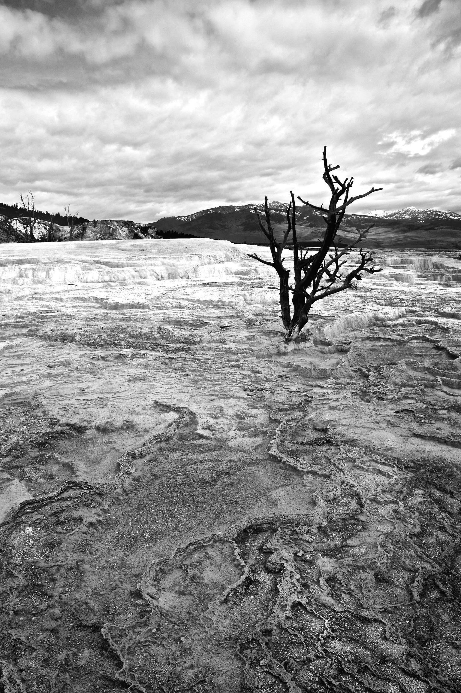 Dead tree among soda deposits