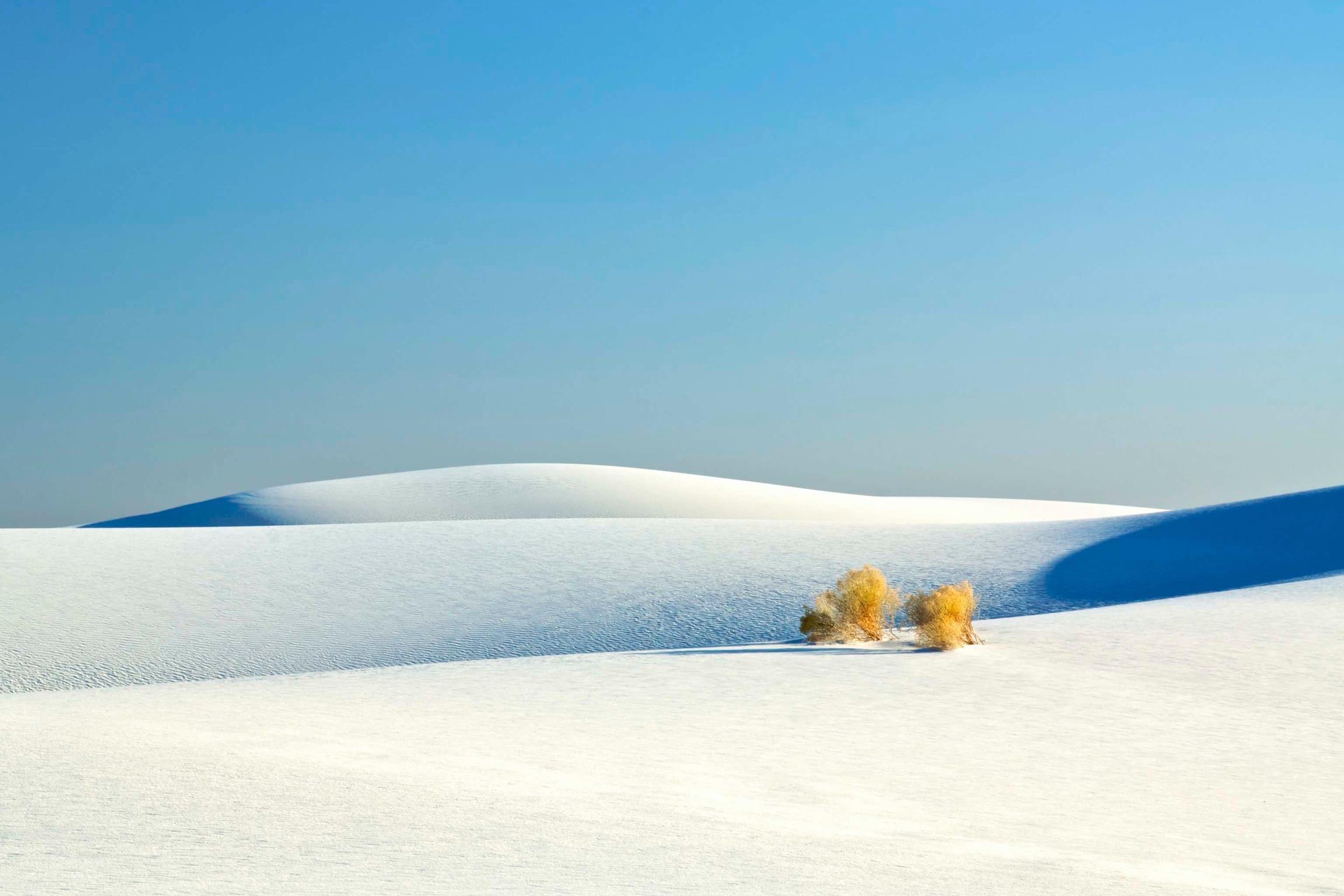 scrub in white sands